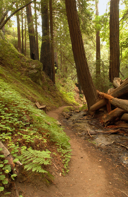 Ewoldsen Trail -  Julia Pfeiffer Burns State Park - Photo by  Brock Bradford