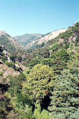 Hot Springs Canyon near Esalen
